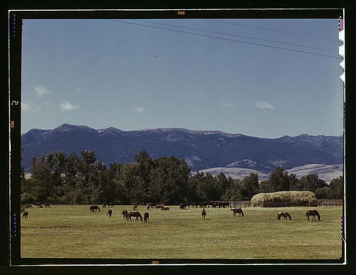 Horse breeding ranch, Grant Co., Oregon (LOC)