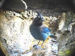 Capulin Springs Bird Log
