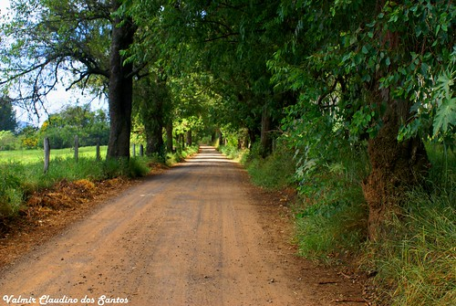 Estradinha na roça. (A small road on the countryside)