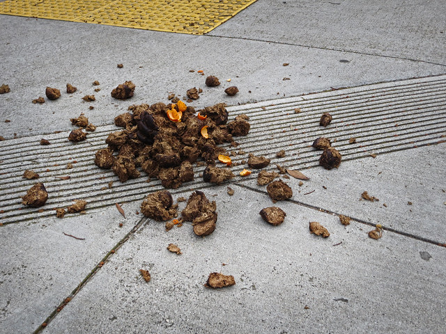 horse shit and orange peels, san francisco 2014