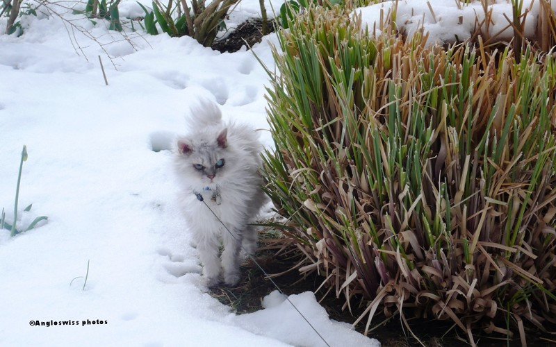 Fluffy - how can I get back without walking on the snow?