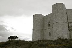 dialogo fra un Albero e un Castello