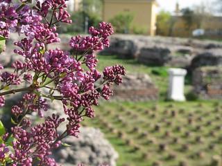 Изображение на Roman Baths близо до Анкара. turkey ruins roman baths ankara турция бани анкара римские