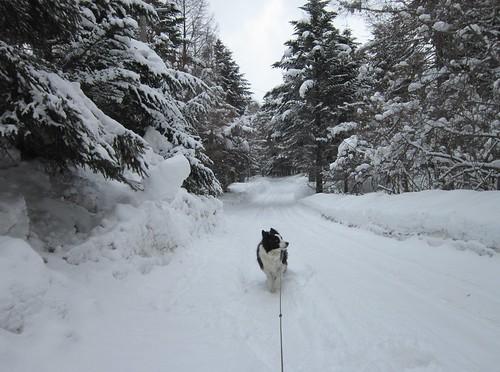雪が降り始めた朝の散歩道 2014年3月10日09:51 by Poran111
