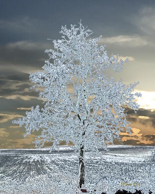 Ice Tree On Bright Sunset Flickr Photo Sharing