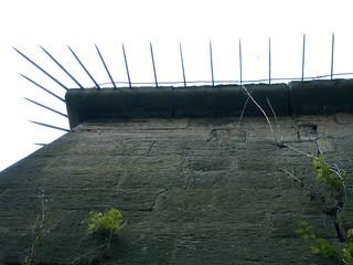 Festungsmauer der Festung Königstein mit Stacheln 205
