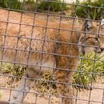 San Diego Zoo 054
