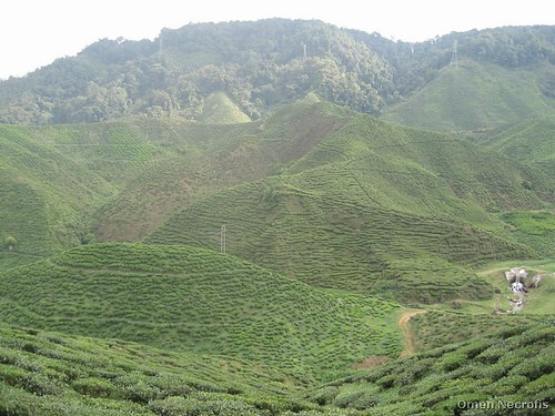 Cameroon Highlands