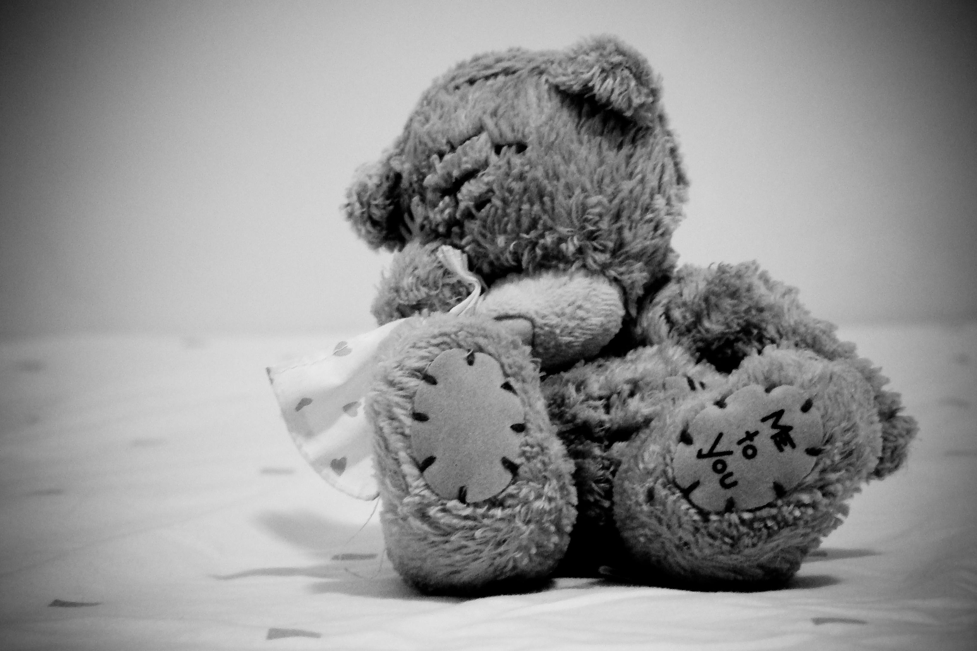 мишки тедди грустные картинки