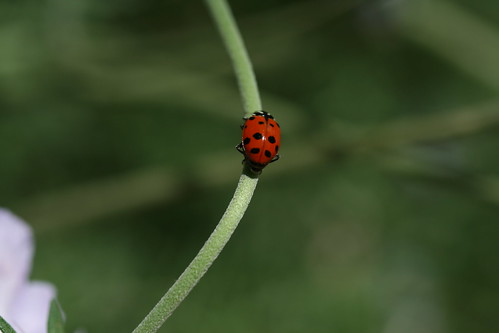 Lady Bug Super-Highway