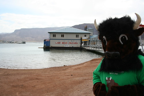 Buddy Bison at Lake Mead Cruises