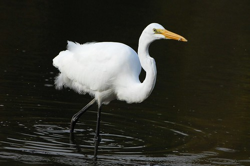 ~Egret Fishing~