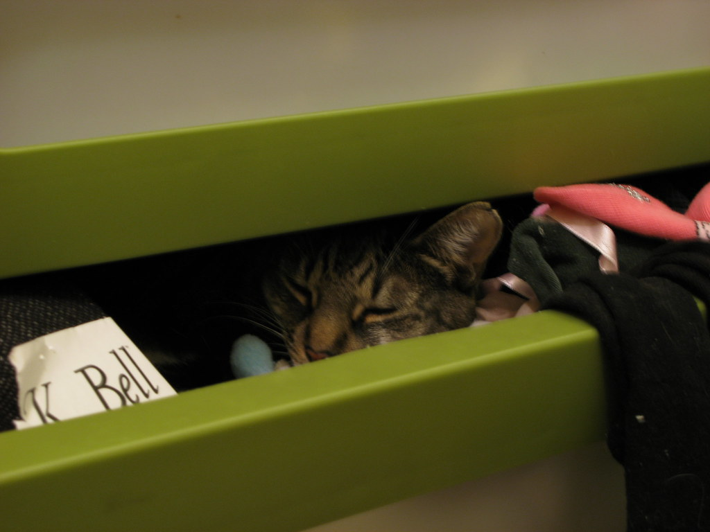 sid curled up in my sock drawer