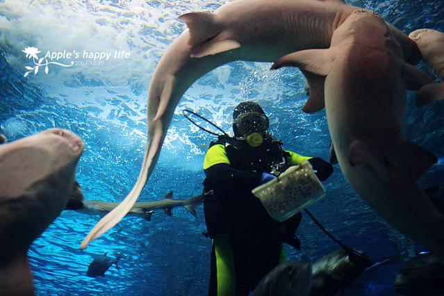 壁纸 海底 海底世界 海洋馆 水族馆 500_333