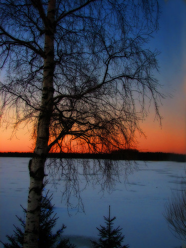 blue winter orange lake snow nature manipulated suomi finland koivu evening scenery view january birch oulu lumi talvi maisema orton ilta tammikuu luonto sininen oranssi kuivasjärvi abigfave superbmasterpiece treesubject diamondclassphotographer theperfectphotographer