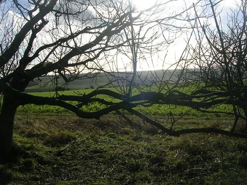 Scene through trees