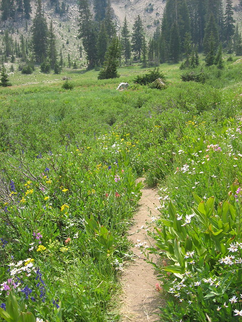 Grizzly Gulch Loop 07.22.07