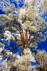 Infrared_091 by johnswanda