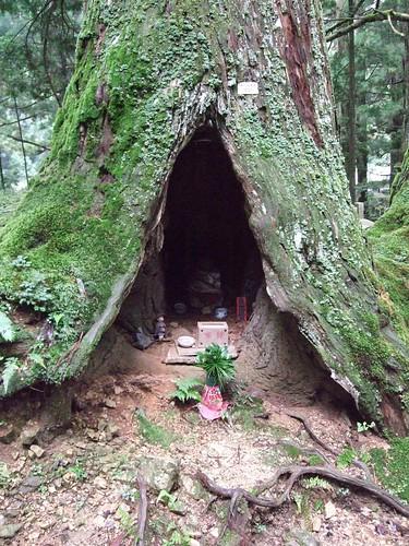 Tree Shrine in Okunoin Cemetary on Mt. Koya