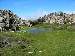 Plaine d'Uovacce : le laquet du Monte Tignoso aquatique en mai 2007