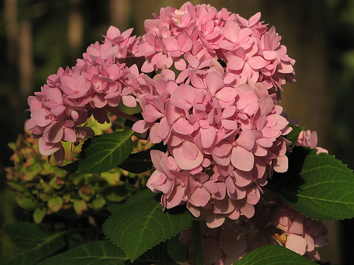 autumn flower fall blossom arboretum sfa bloom mast