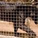 San Diego Zoo 045