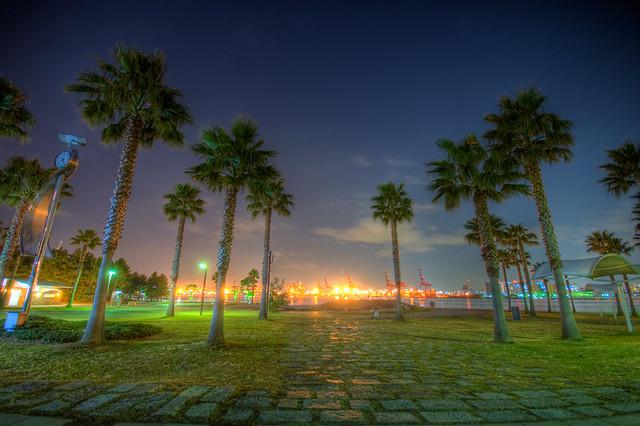 night park palm tree