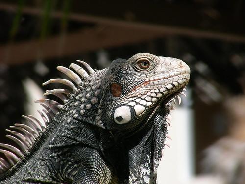 Animais exóticos em cativeiro - Petlove - O Maior Petshop Online do Brasil