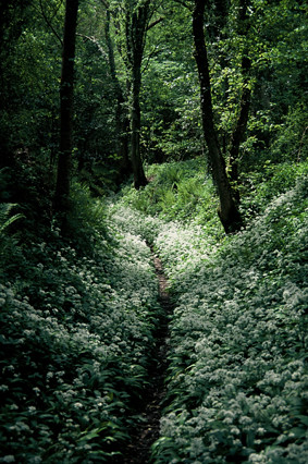 """Green Path"", Much Wenlock, Shropshire, UK"