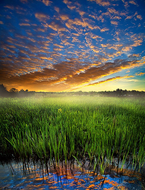 Reflected in Sunrise