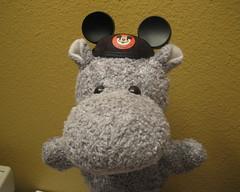 Hippo Ears