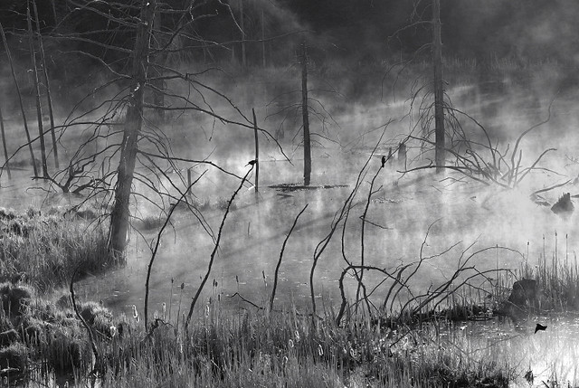 Three Blackbirds in the Morning
