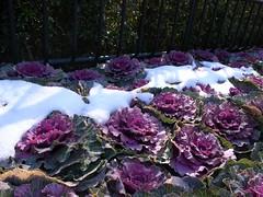 雪@上野動物園