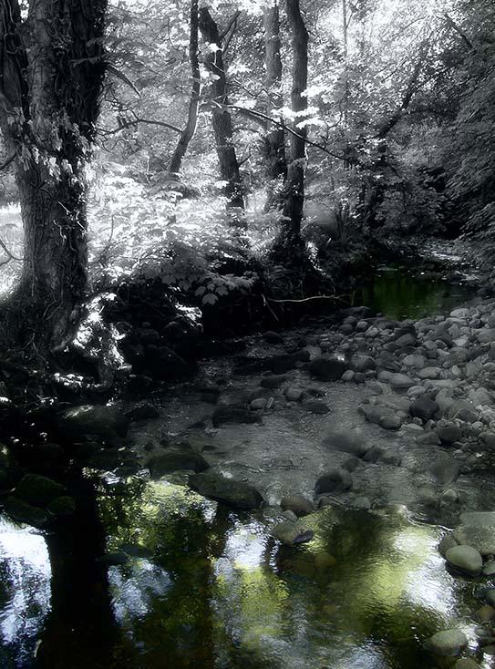 Photography - Stone Stream by Nicholas M Vivian