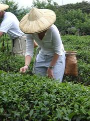 flower(0.0), garden(0.0), soil(0.0), lawn(0.0), agriculture(1.0), farm(1.0), field(1.0), gardener(1.0), produce(1.0), farmworker(1.0), crop(1.0), rural area(1.0), plantation(1.0),