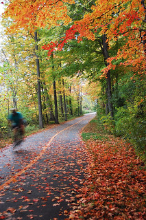 bike path with leaves | by hfljaz