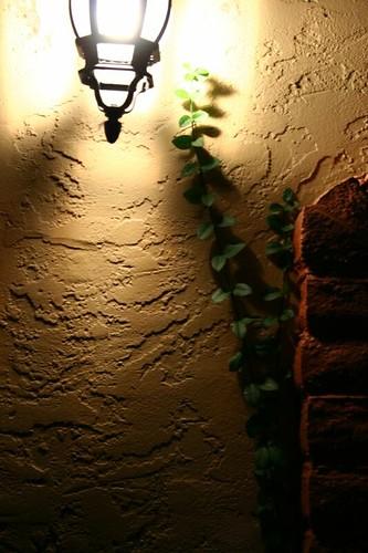 light + vine