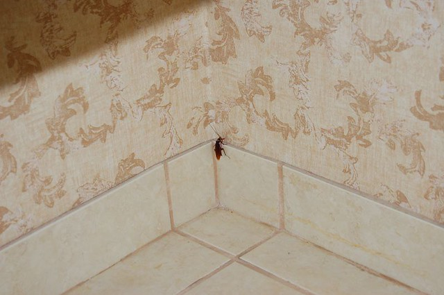 Cockroach in bathroom at holiday inn st augustine for One cockroach in bathroom