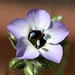 gilia - Photo (c) Philip Bouchard, some rights reserved (CC BY-NC-ND)