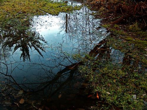 trees reflection nature water puddle washington cc cf mudpuddle pgc millersylvania naturelandscape maytown millersylvaniastatepark thechallengegame maytownwashington parksgardenscemeteries