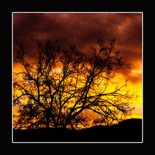 sky orange tree silhouette clouds sunrise himmel bec sonnenaufgang soe baum breathtaking morgensonne themoulinrouge blueribbonwinner lifeasiseeit magicdonkey 35faves goldenmix golddragon mywinners abigfave artlibre anawesomeshot aplusphoto isawyoufirst superbmasterpiece goldenphotographer diamondclassphotographer onlythebestare reginaaustria excapture betterthangood thegoldendreams goldstaraward dragongoldaward multimegashot