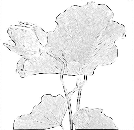 Lotus Flower and leaf Photo based Sketch