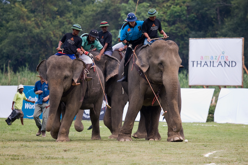 elephant polo weird sport