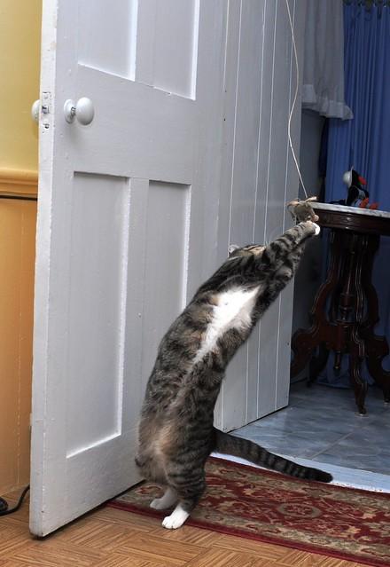 Cat Dancing 2