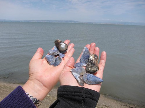 blue mussels, purple IMG_5937