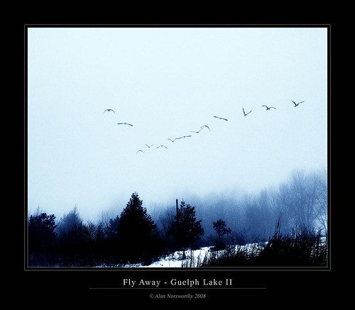 Fly Away - Guelph Lake Blue II by Alan Norsworthy