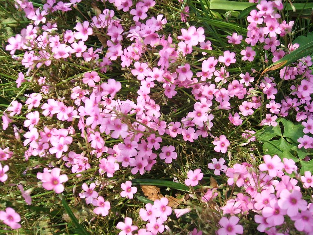 Beautiful Flowers Screensavers