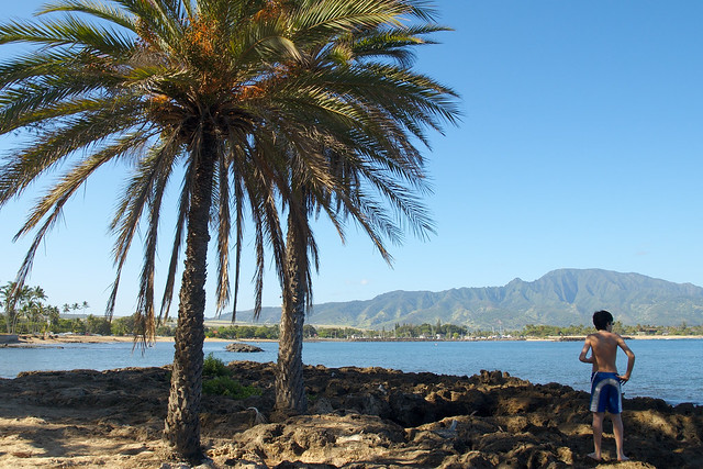Header of haleiwa