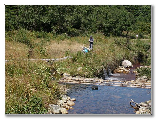 取水堰からすぐの場所は,河原のような植生になっていた.