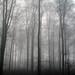 Misty Christmas by mandelforce